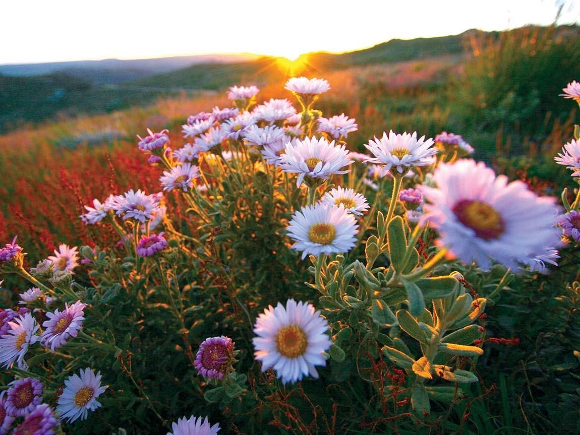 Wildflowers in Davies Plain, Gippsland, Victoria, Australia