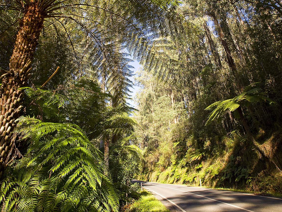 West Gippsland Hinterland Drive, Gippsland, Victoria, Australia