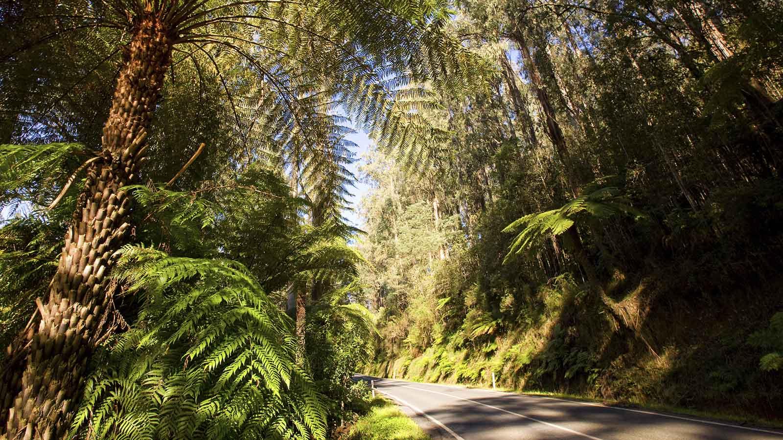 West Gippsland Hinterland Drive, Gippsland Victoria, Australia