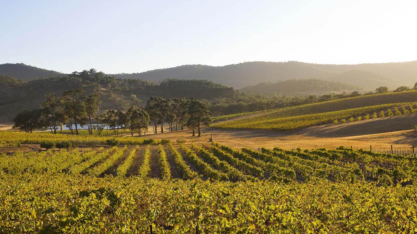 Pyrenees Winery, Goldfields, Victoria, Australia