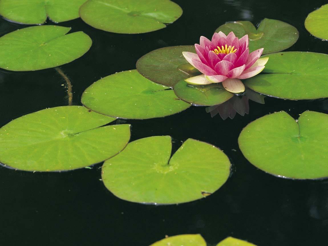 Image Result For Ballarat Parks And Gardens