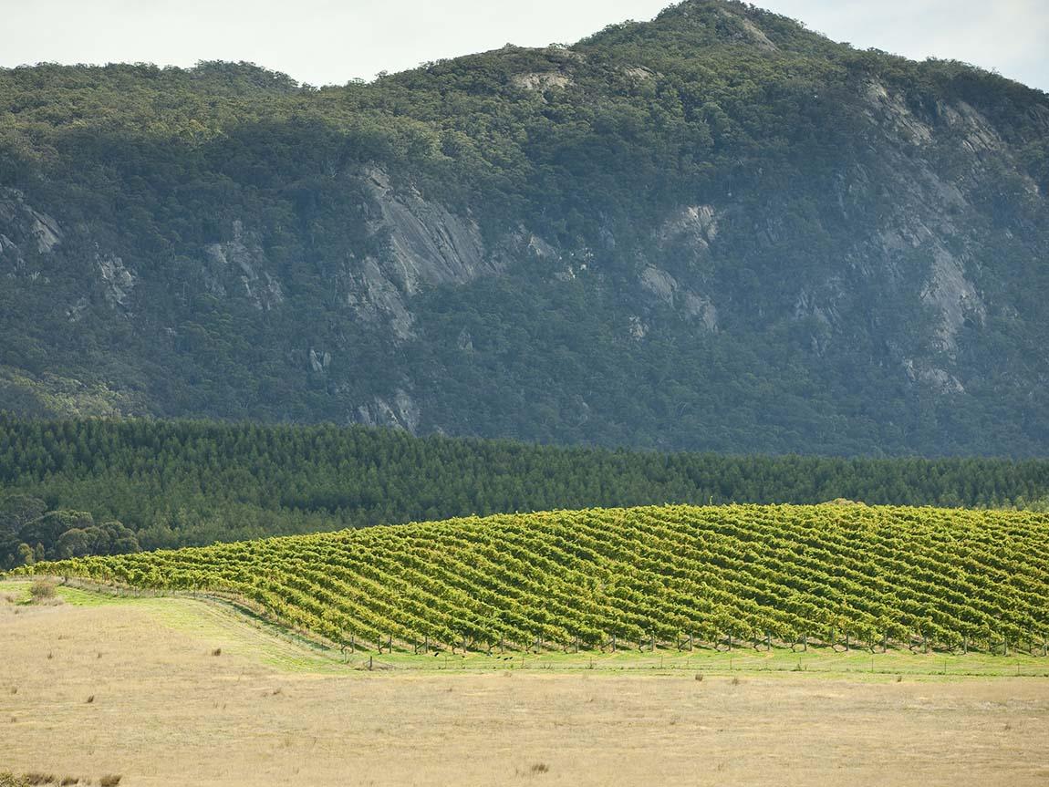 Mount Langi Ghiran Vineyard, Grampians, Victoria, Australia