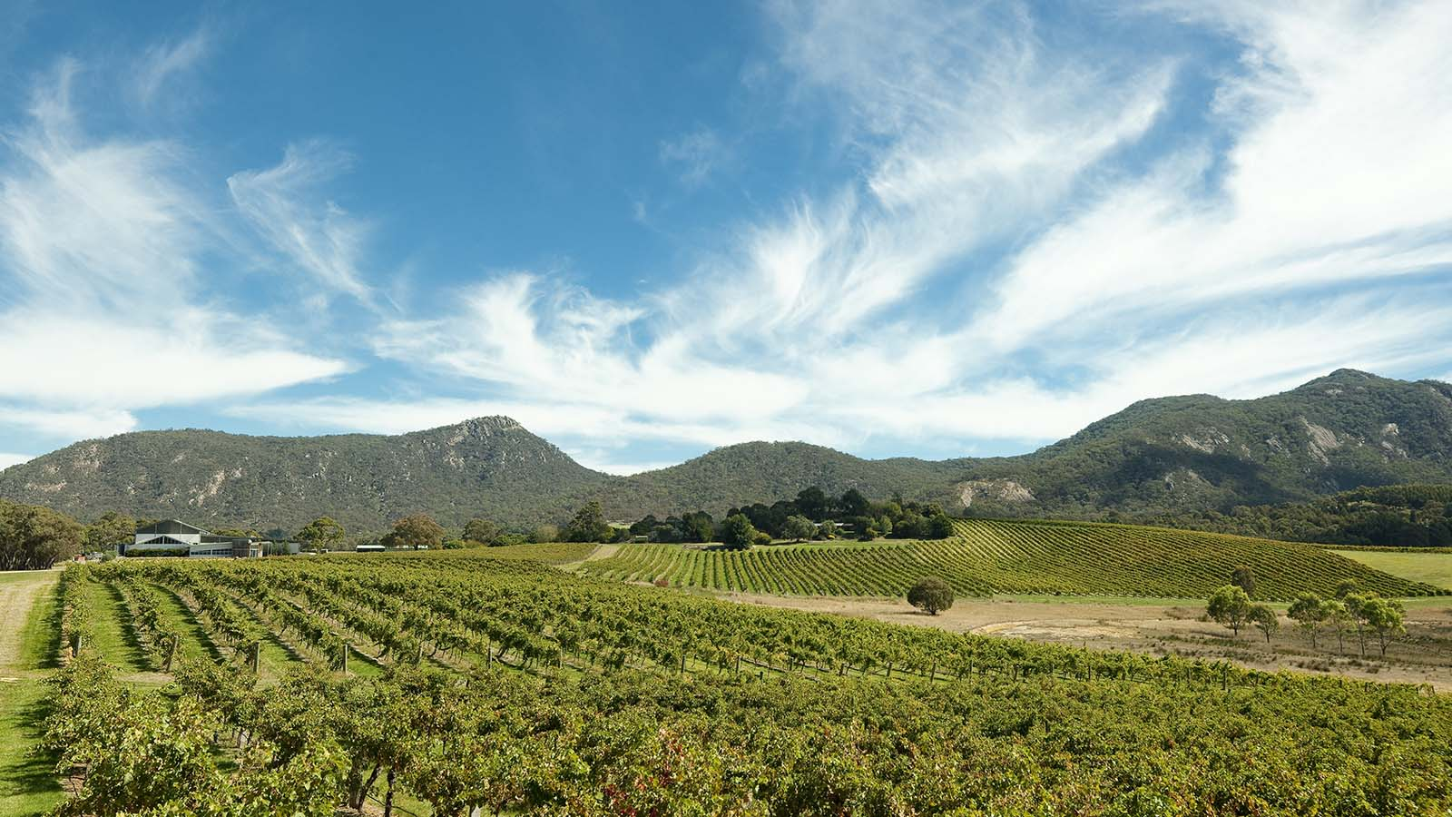 Mount Langi Ghiran Vineyard, The Grampians, Victoria, Australia