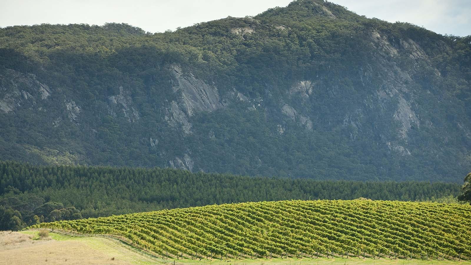 Moung Langi Gharan Vineyard, The Grampians, Victoria, Australia