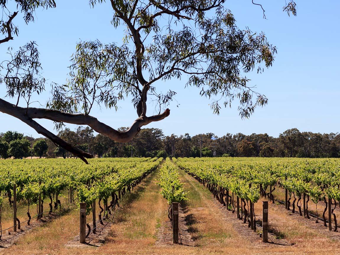 Seppelt, Grampians, Victoria, Australia. Image: Roberto Seba