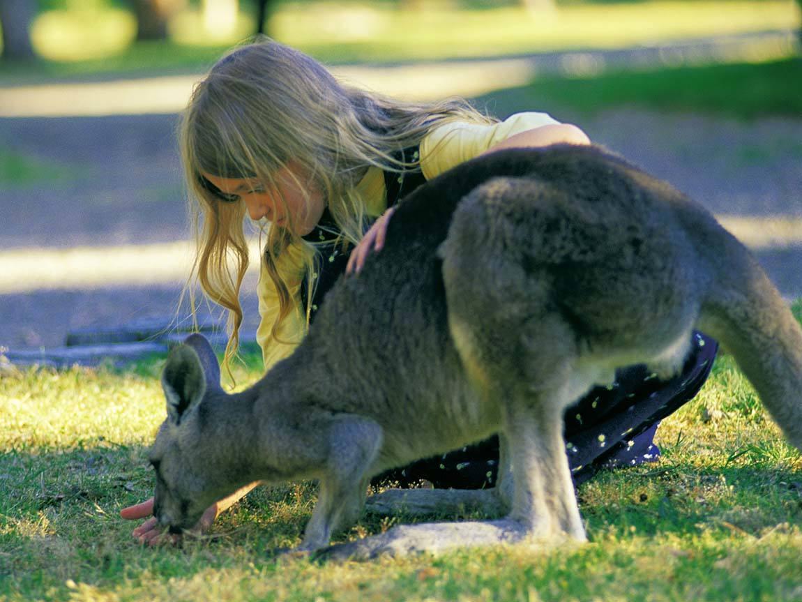 Girl with a kangaroo, Grampians, Victoria, Australia