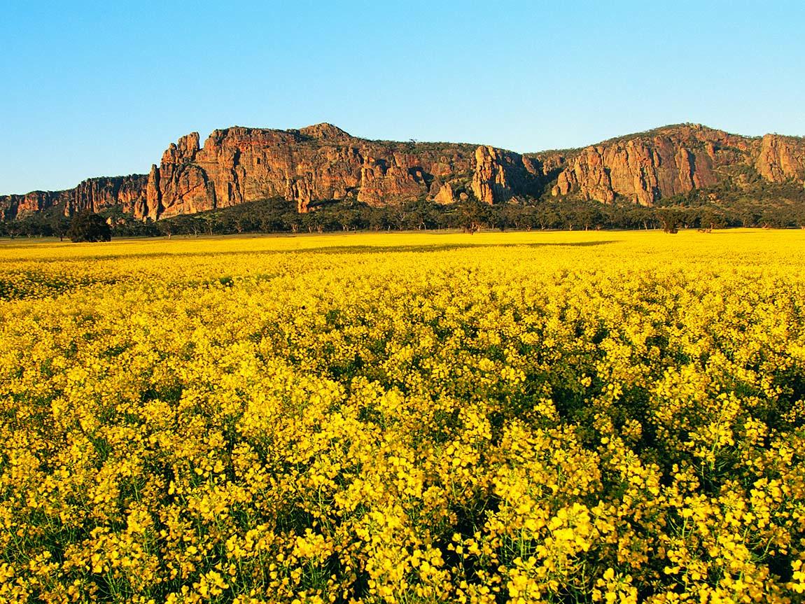 Mount Arapilies, Grampians, Victoria, Australia