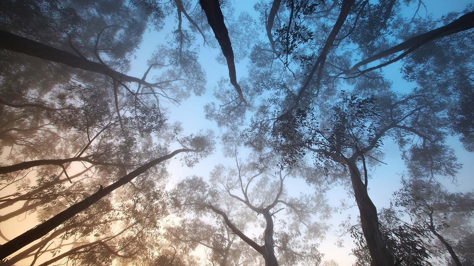 Misty morning at Boroka Lookout, Grampians, Victoria, Australia