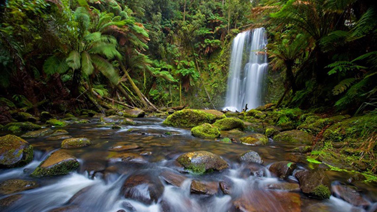 Beauchamp Falls, Great Ocean Road, Victoria, Australia