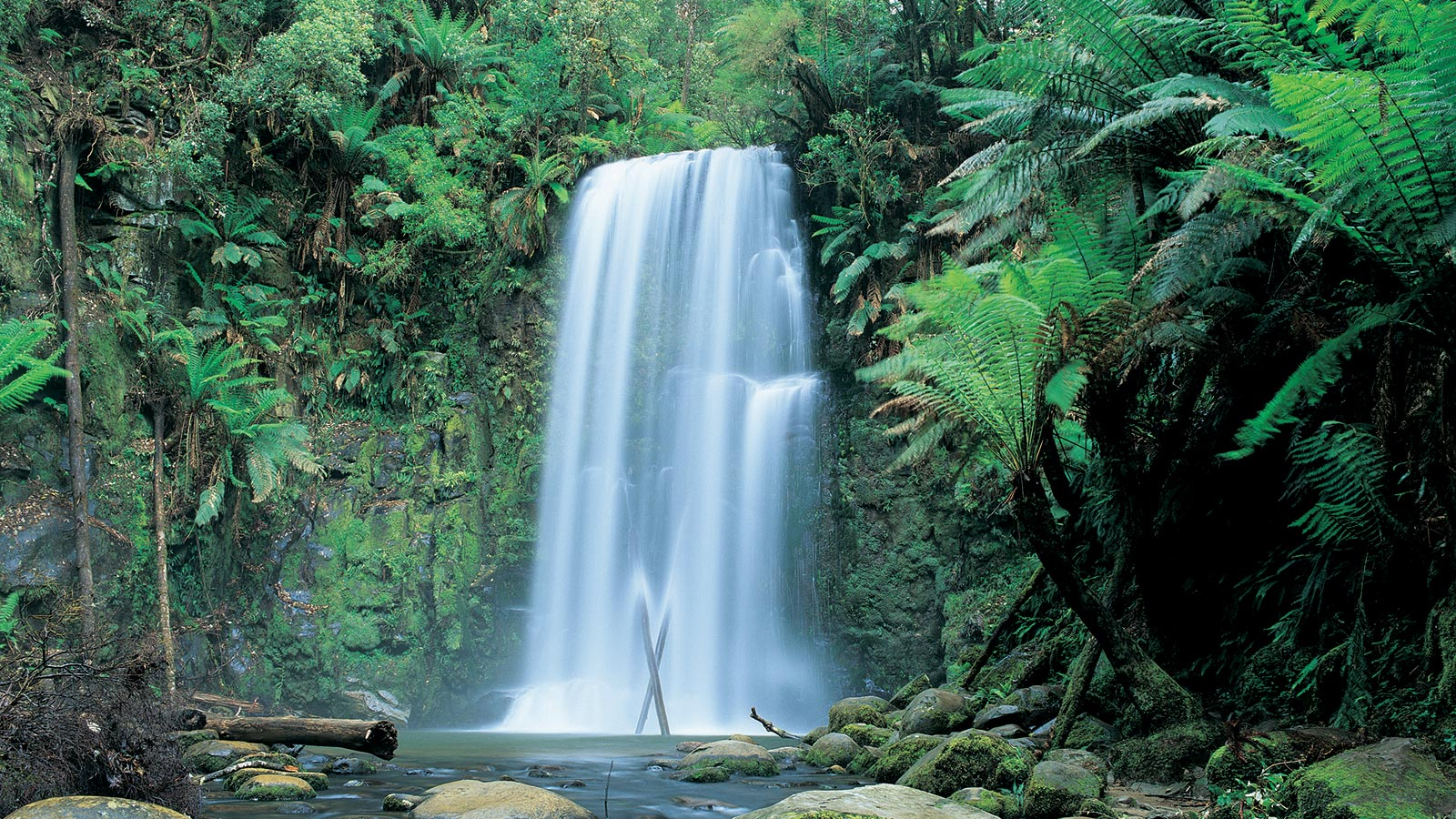 Beauchamp Falls, Beech Forest, Great Otway National Park, Great Ocean Road, Victoria, Australia