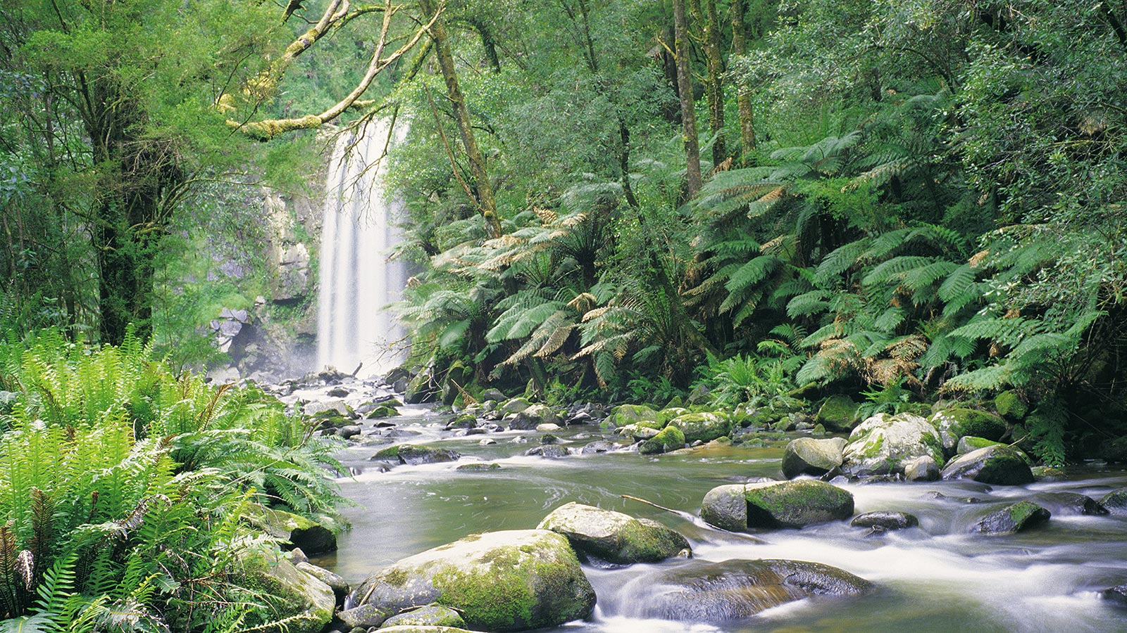 Hopetoun Falls, Beech Forest, Great Otway National Park, Great Ocean Road, Victoria, Australia. Photo: Holger Leue