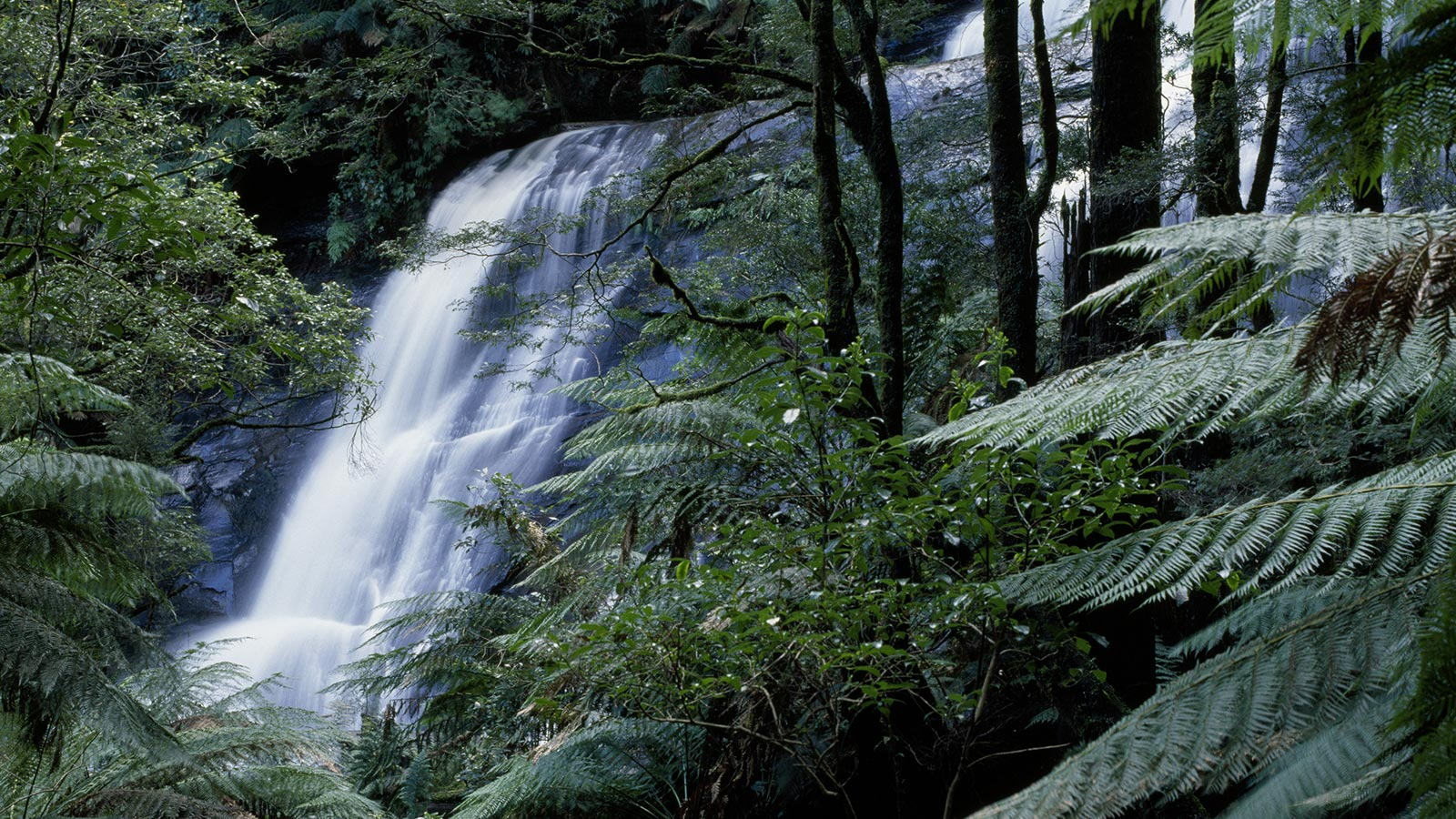 Triplet Falls, Great Otway National Park, Great Ocean Road, Victoria, Australia