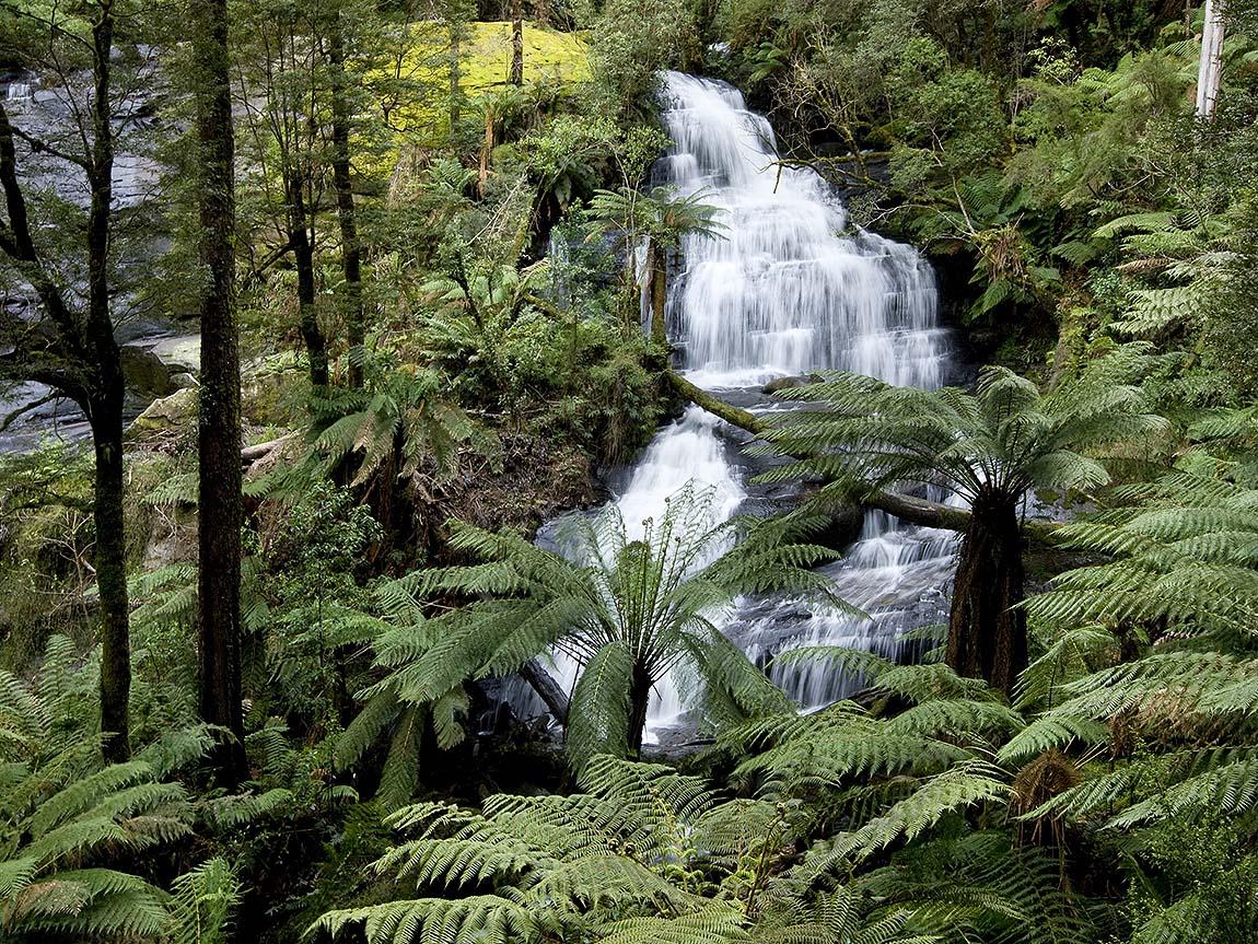 Waterfall in Great Otway National Park, Great Ocean Road, Victoria, Australia