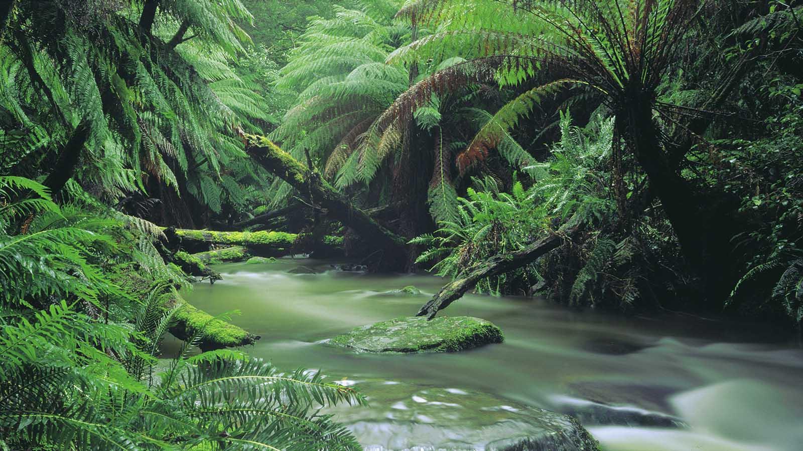 Great Otway National Park, Great Ocean Road Victoria, Australia