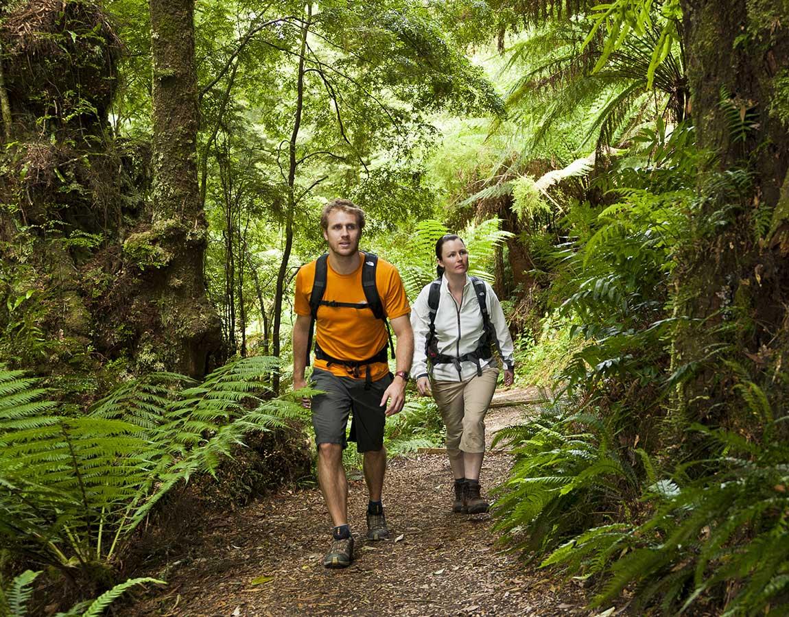 Melba Gully rainforest, Great Ocean Road, Victoria, Australia