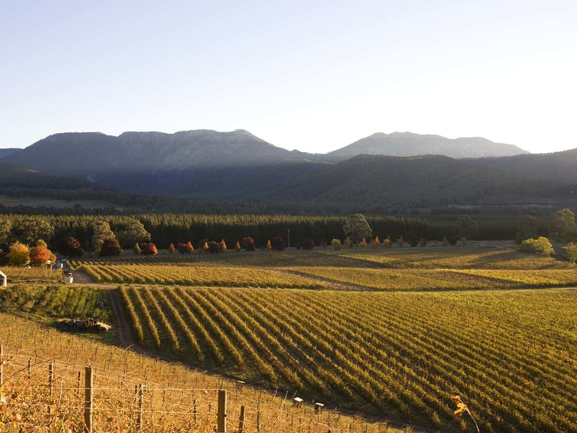 Feathertop Winery, Porepunkah, High Country, Victoria, Australia