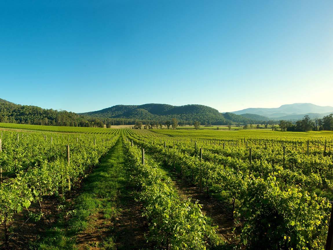 Pizzini Wines, High Country, Victoria, Australia