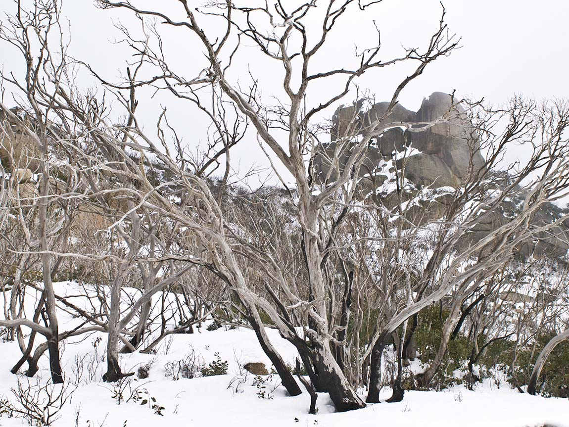 Mount Buffalo National Park, High Country, Victoria, Australia. Photo: Christian Pearson, courtesy Parks Victoria