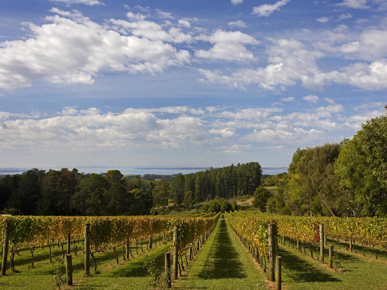 Red Hill Estate, Mornington Peninsula, Victoria. Photo by David Hannah