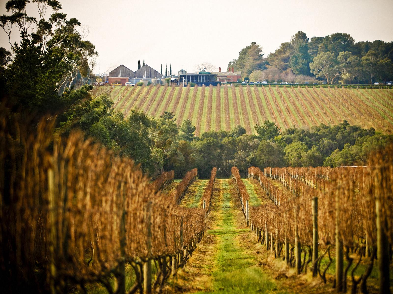 Willow Creek Vineyard, Mornington Peninsula, Victoria. Photo by Adrian Lander.