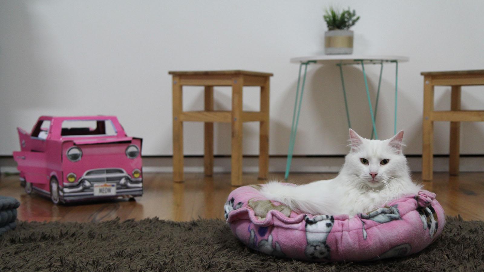 Cat Cafe Melbourne