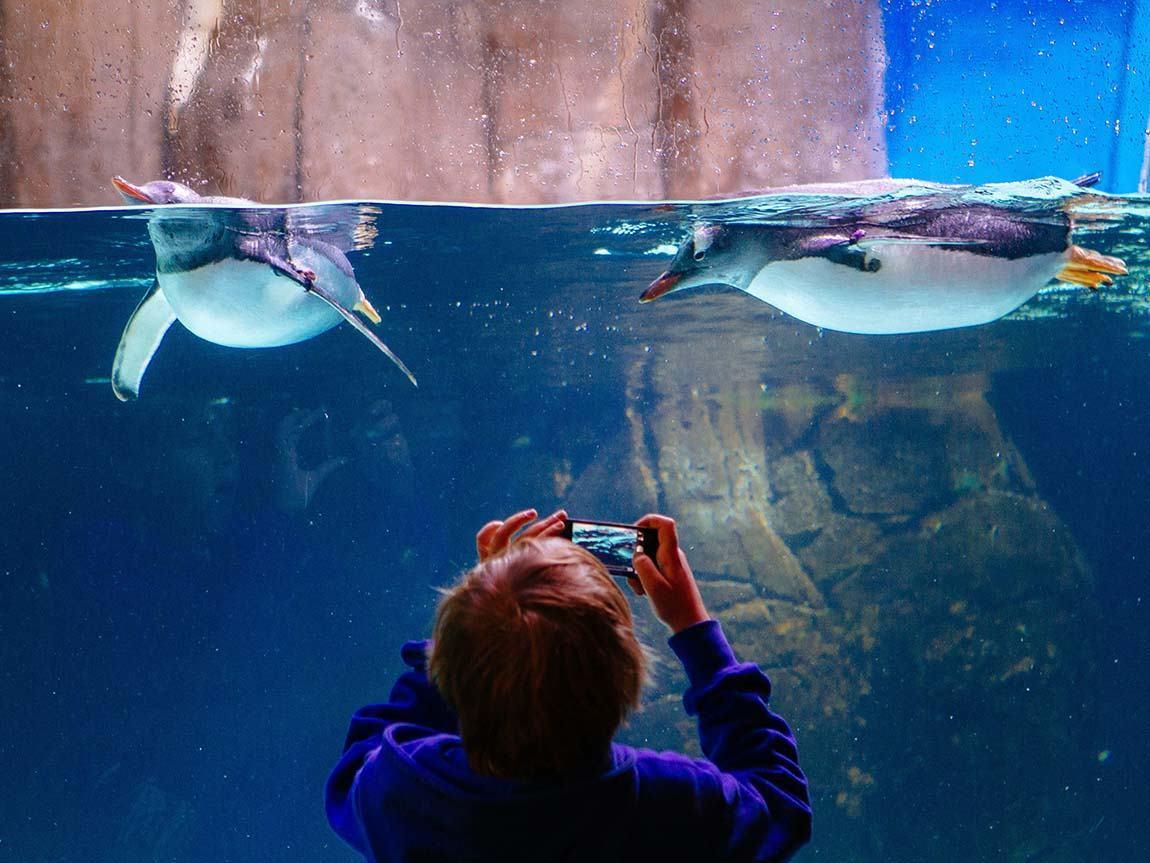 SEA LIFE Melbourne Aquarium, Melbourne, Victoria, Australia. Phot: Roberto Seba