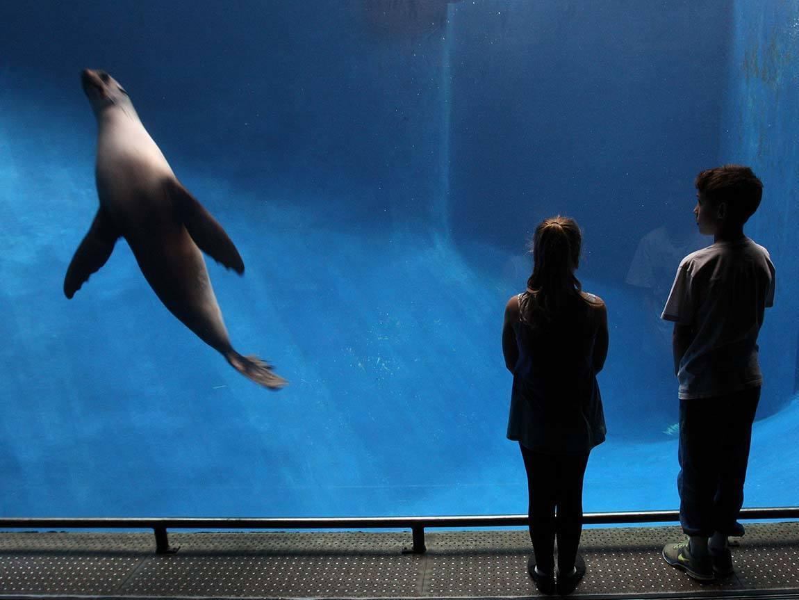 Children watching seals at Melbourne Zoo, Melbourne, Victoria, Australia