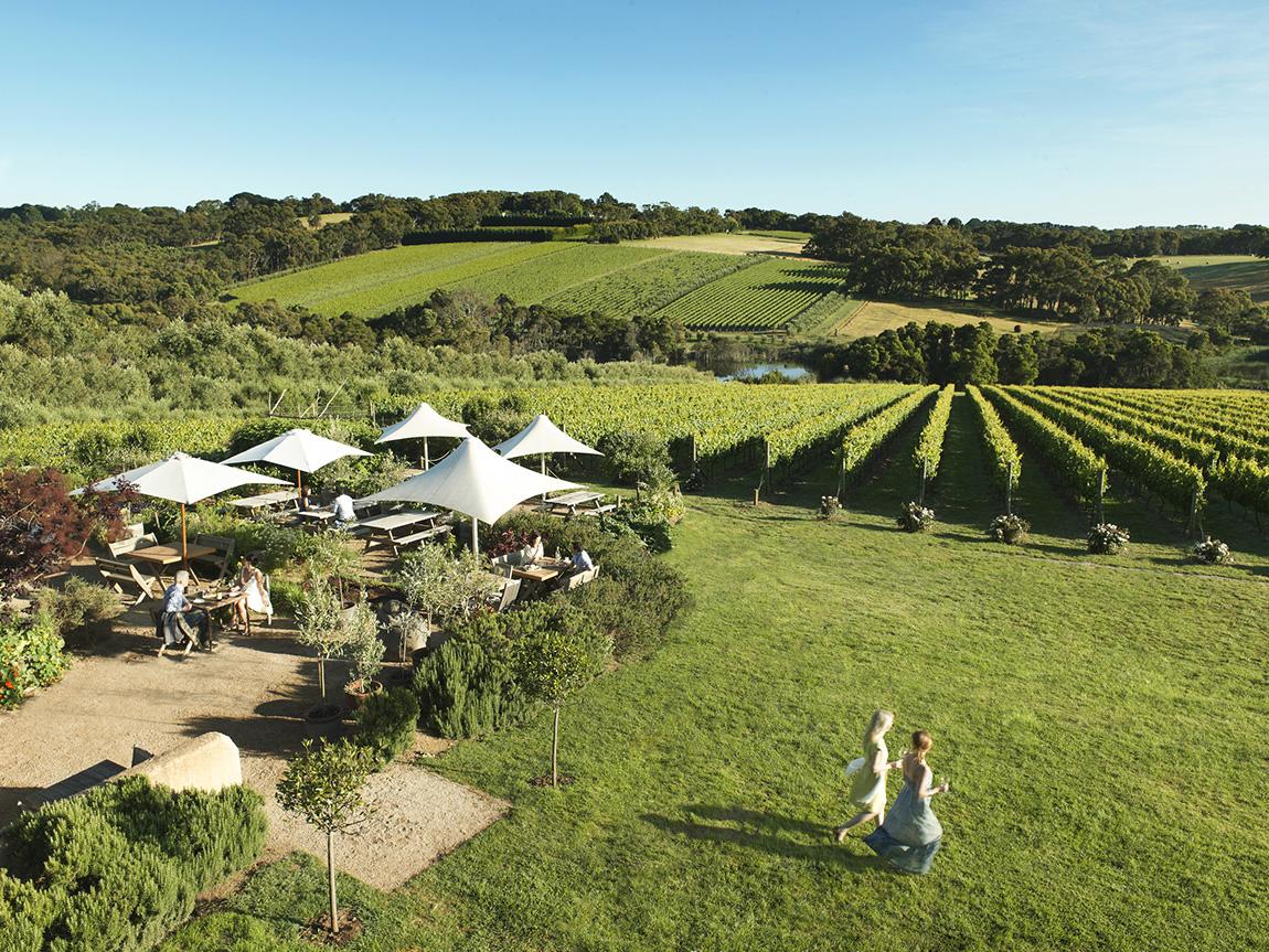 Montalto Vineyard and Olive Grove, Red Hill, Mornington Peninsula, Victoria, Australia