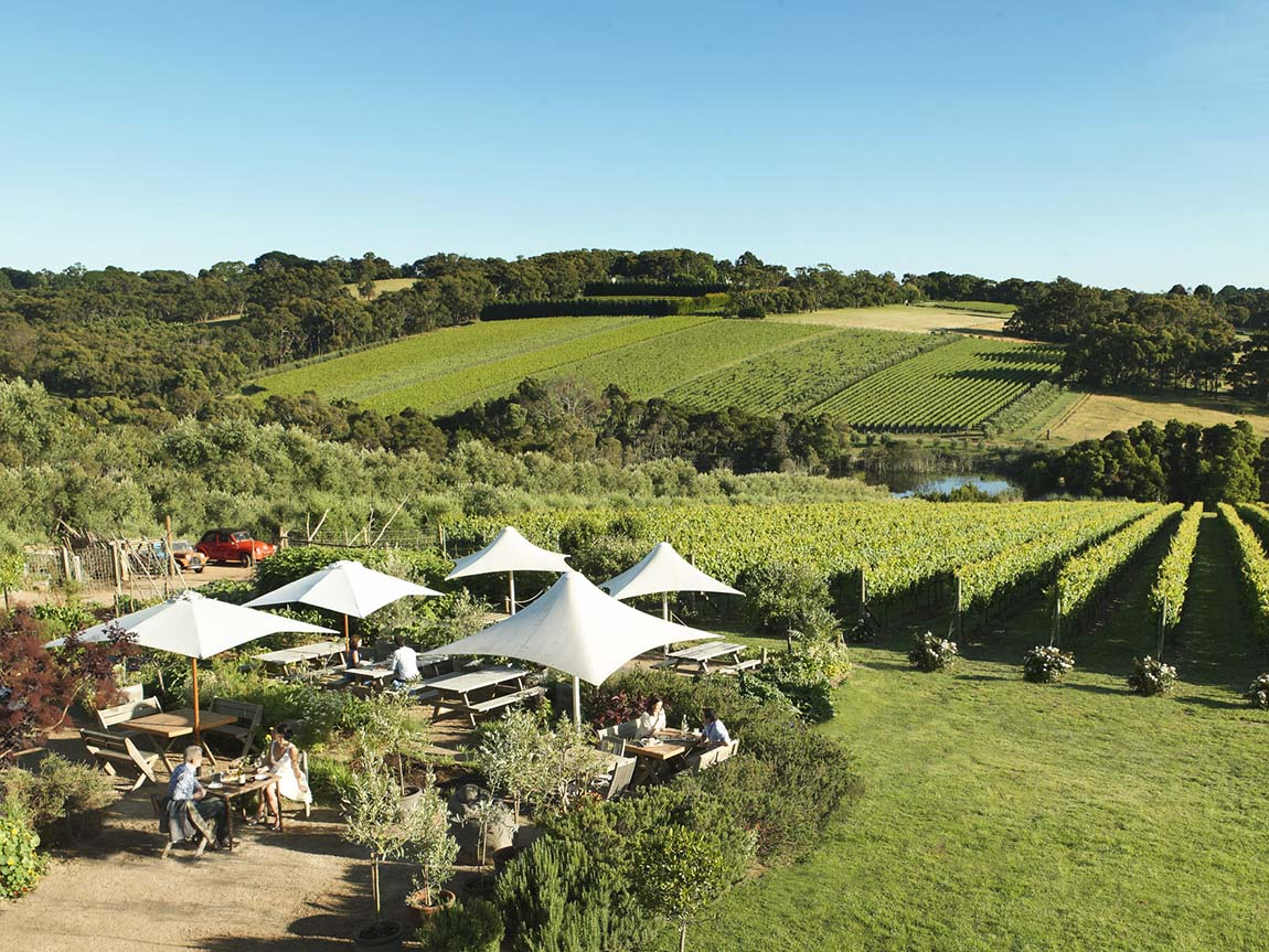 Montalto Vineyard & Olive Grove, Mornington Peninsula, Victoria, Australia