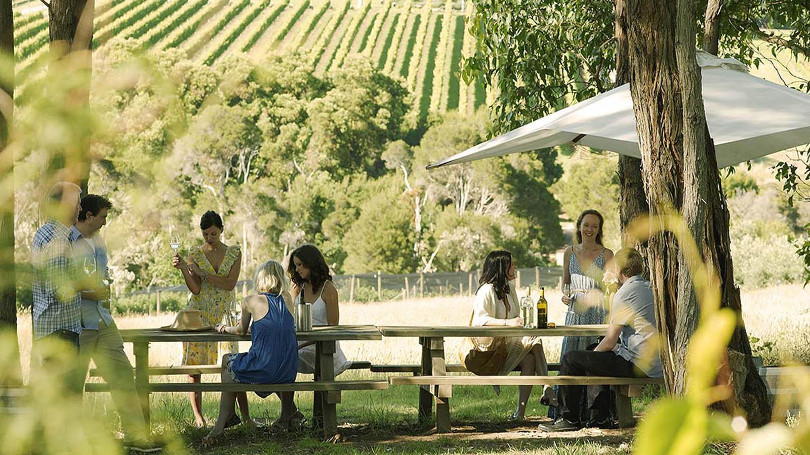 Montalton Vineyard and Olive Grove, Mornington Peninsula, Victoria, Australia