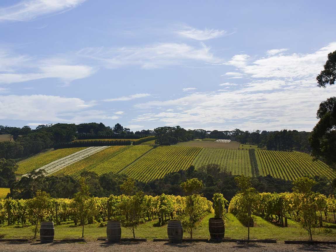 Winery, Mornington Peninsula, Victoria, Australia