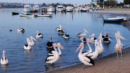 Lakes Entrance Foreshore, Gippsland, Victoria, Australia