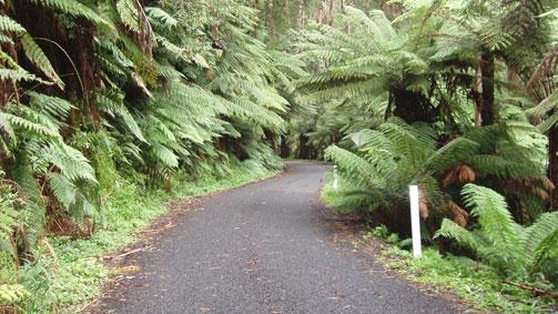 Yarram Tarra Valley Loop, Gippsland, Victoria, Australia