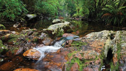 McKenzie River Rainforest Walk, Gippsland, Victoria, Australia