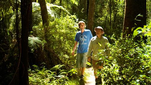 Cabbage Tree Palms Walk, Gippsland, Victoria, Australia