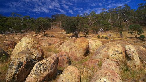 Leanganook Track, Goldfields Track, Goldfields, Victoria, Australia