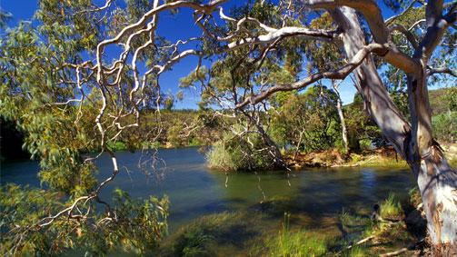 Wallaby Track, Goldfields Track, Goldfields, Victoria, Australia