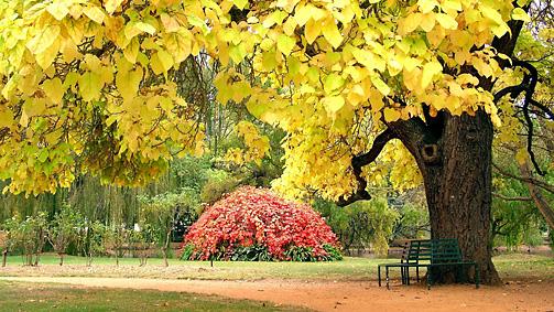Castlemaine Botanic Gardens, Goldfields, Victoria, Australia