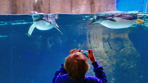 SEA LIFE Melbourne Aquarium, Melbourne, Victoria, Australia. Image: Roberto Seba