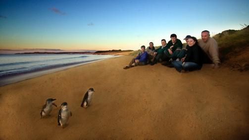 企鹅之旅,菲利普岛,维多利亚州,澳大利亚