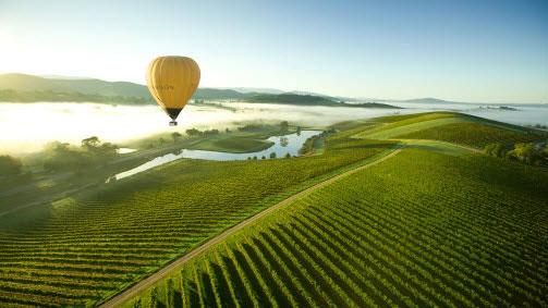 Yarra Valley vineyards, Yarra Valley, Victoria, Australia