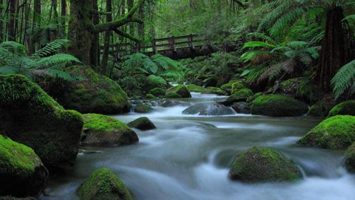 Taggerty Cascades, Yarra Valley and Dandenong Ranges, Victoria, Australia