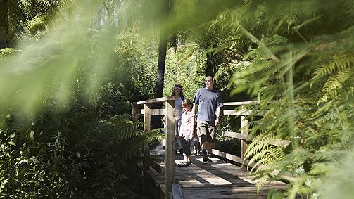 Beauty Spot Trail, Yarra Valley and Dandenong Ranges, Victoria, Australia