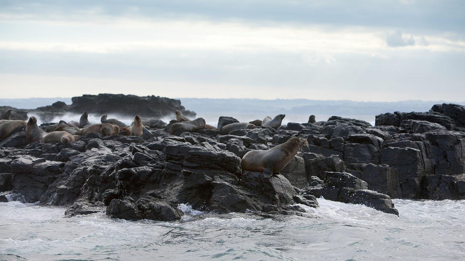Seal Rock, Phillip Island, Victoria, Australia