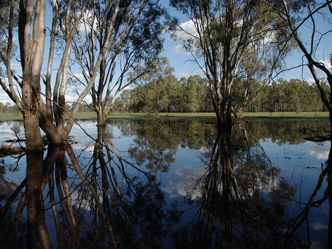 Barmah Nationla Park, The Murray, Victoria, Australia