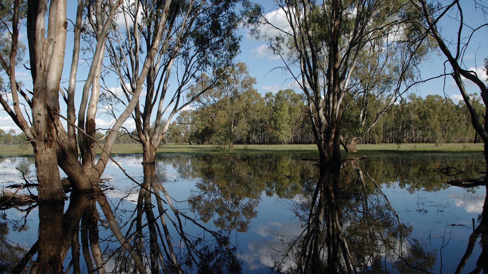 Barmah Nationla Park, The Murray, Victoria, Australia