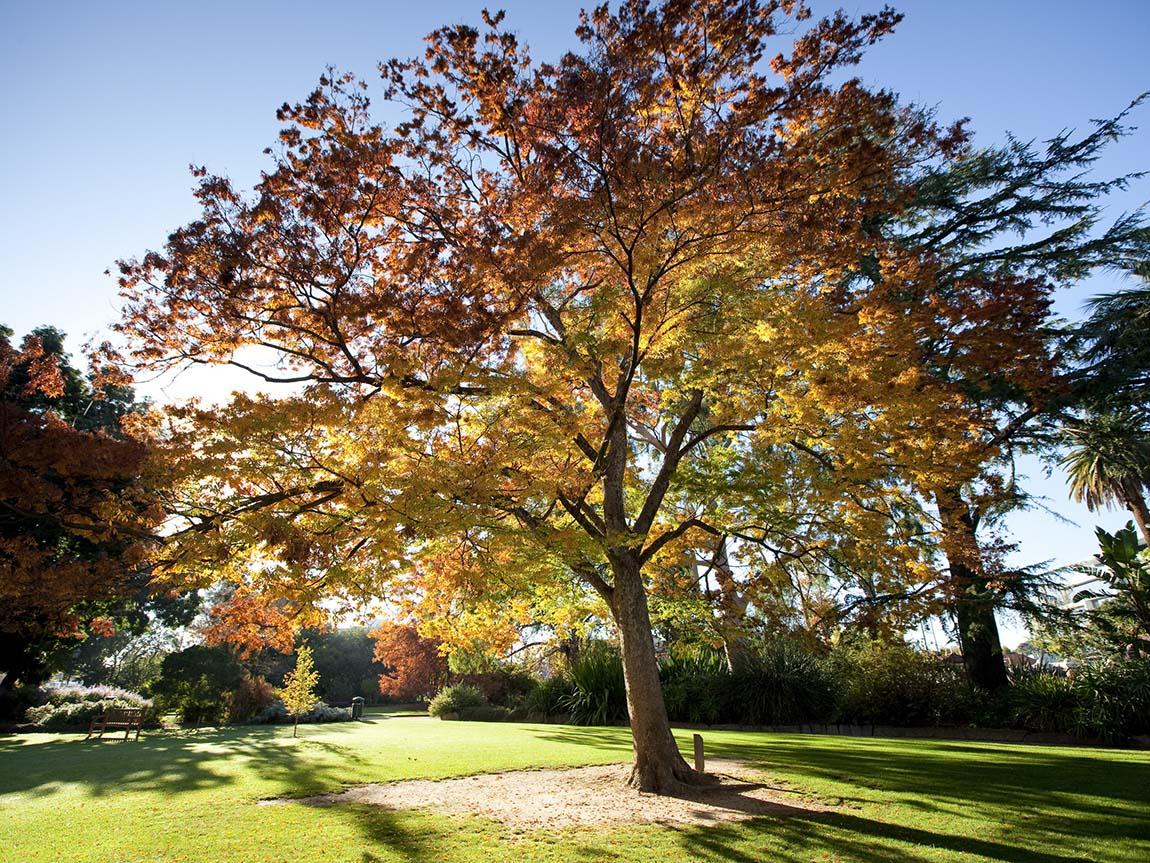 Noreuil Park, Albury, The Murray, Victoria, Australia