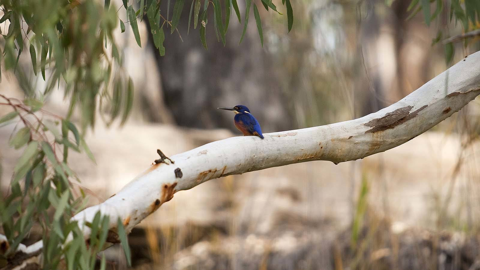 Barmah State Forest, The Murray, Victoria, Australia