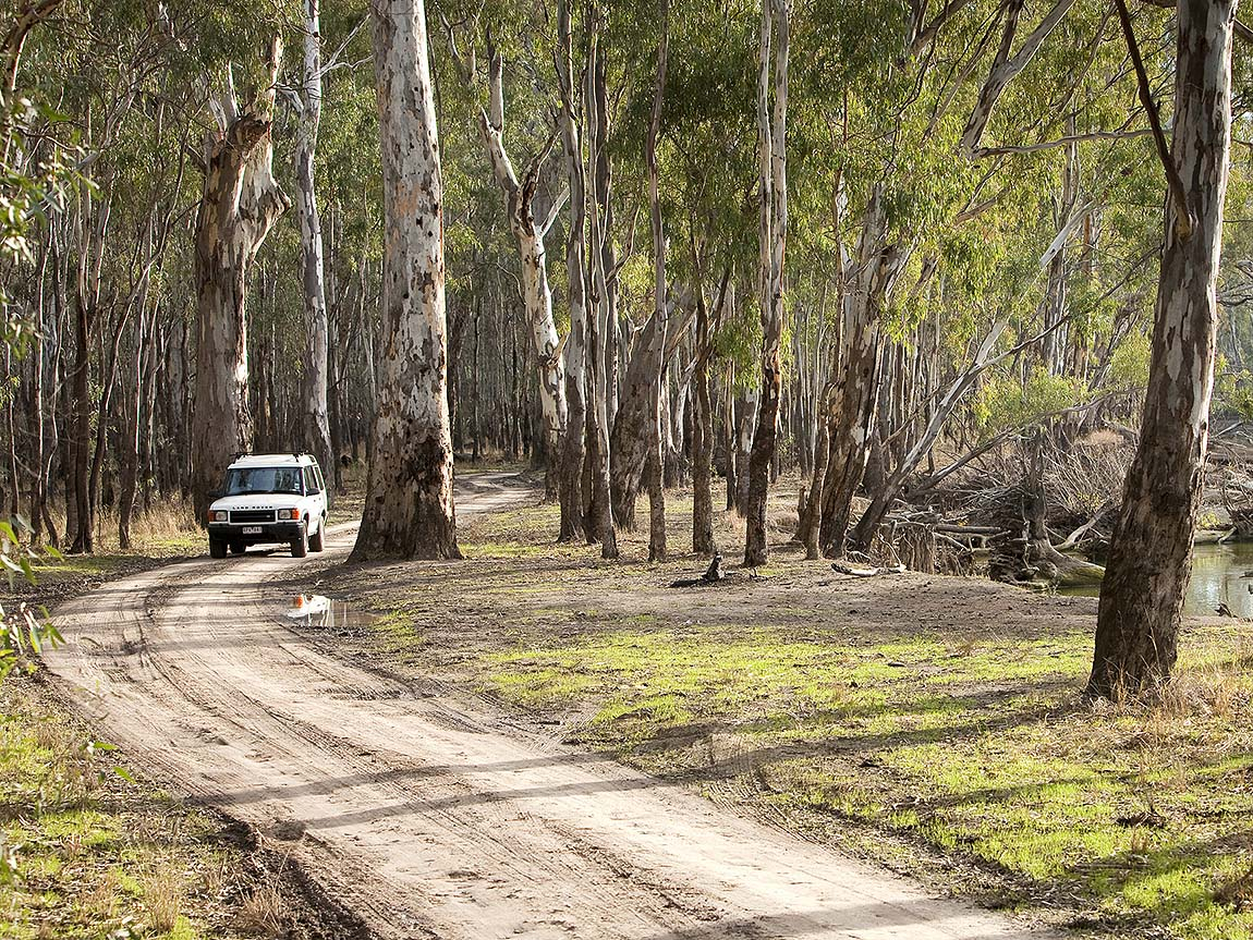 Four wheel driving in Barmah National Park, The Murray, Victoria, Australia