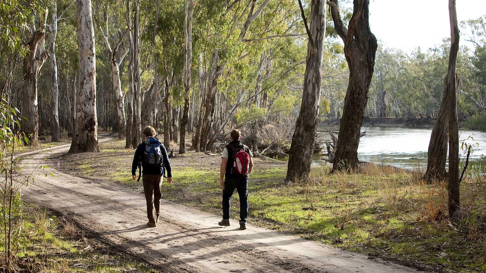 Barmah State Park, The Murray, Victoria, Australia